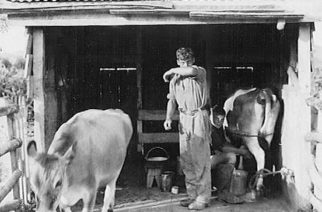 A 1909 milking shed before government investment