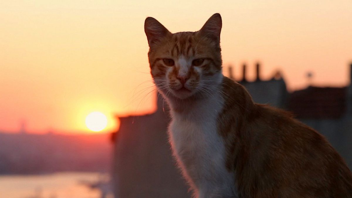 Kedi Film Review Witchdoctor Co Nz