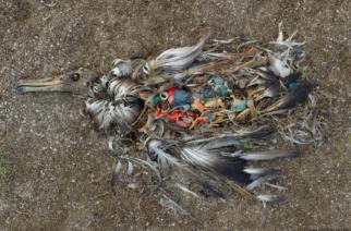 Ten Rivers Dump Four Million Tonnes Of Plastic In Oceans Each Year